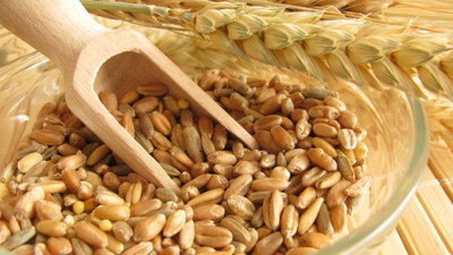 Le grain blé